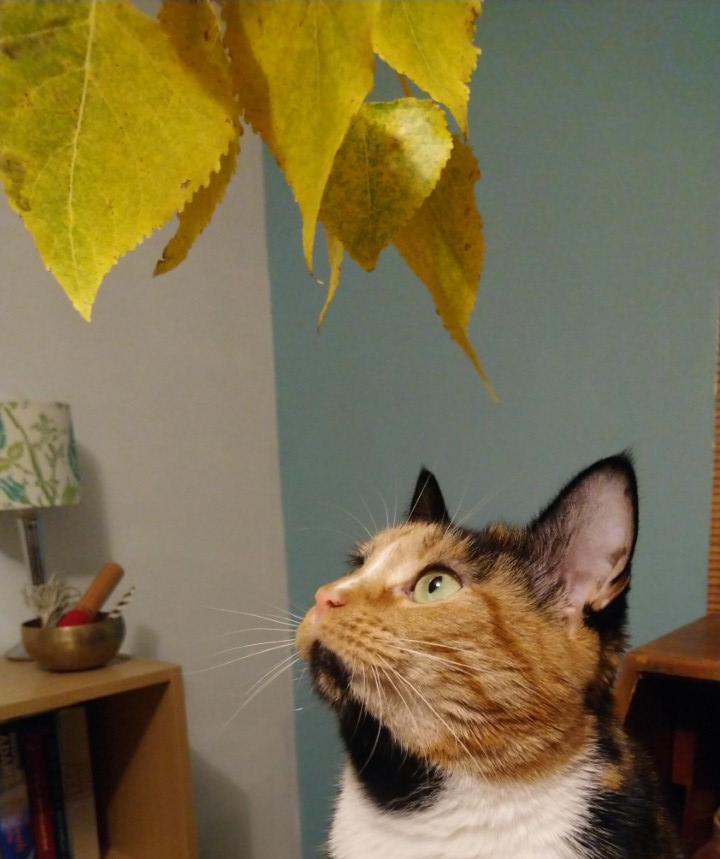 Linnet and her autumn leaves